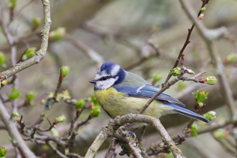 There is a lot of bird life in the park.  I captured this Blue Tit beside the canal walkway.